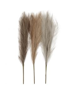 Pampas grass, L: 50 cm, light beige, light brown, light grey, 3 pc/ 1 bundle