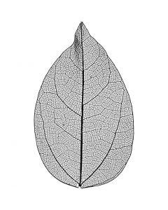 Skeleton leaves, L: 6-8 cm, black, 20 pc/ 1 pack