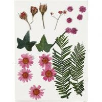 Pressed Flowers and leaves, light red, 19 asstd./ 1 pack