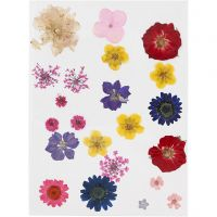 Pressed flowers, assorted colours, 1 pack