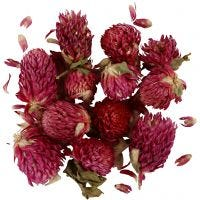Dried flowers, Red clover, L: 1,5-2,5 cm, D: 1 - 1,5 cm, purple, 1 pack